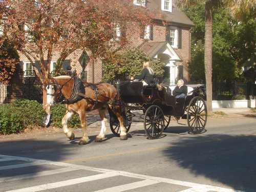 Horse and buggy driver in beautiful Charleston
