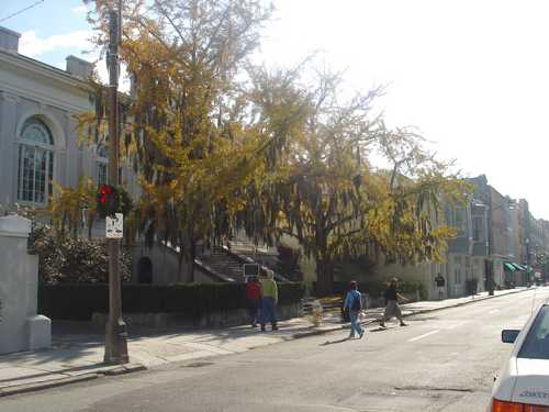 Charleston, SC: Trees in city with Spanish Moss