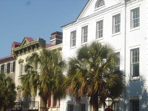 Palm trees on street in Charleston